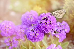 flowers-777869_960_720